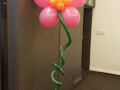Giant Balloon Flower